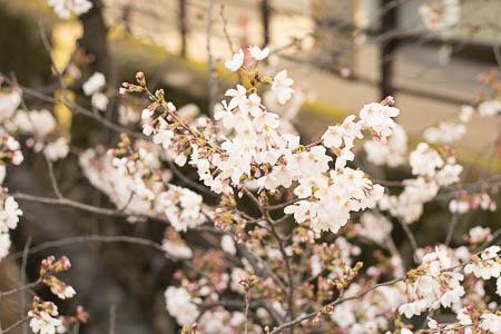 武蔵小杉 美容室 ムーンサウス 桜