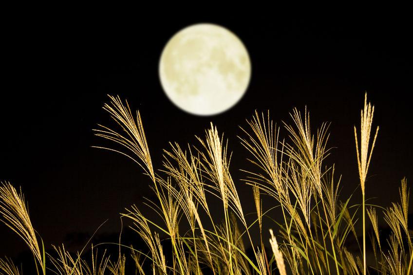 9月  September お月見 月とすすき